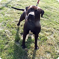 Adopt A Pet :: Spartacus - Tinton Falls, NJ