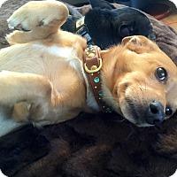 Adopt A Pet :: Howie - Salem, OR