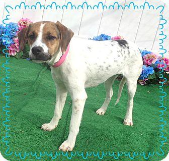 Beagle Mix Dog for adoption in Marietta, Georgia - ETSY
