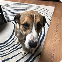 Adopt A Pet :: Neville Longbottom - Jersey City, NJ