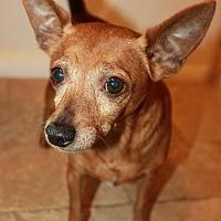 Adopt A Pet :: Taco - Buckeye, AZ