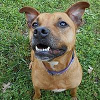 Adopt A Pet :: Bubbles - Huntsville, AL