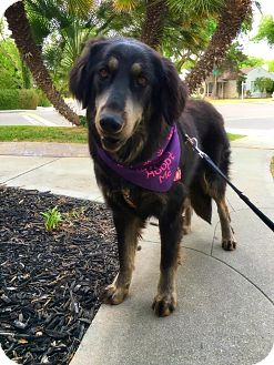 German Shepherd Dog Mix Dog for adoption in Tracy, California - Cookie