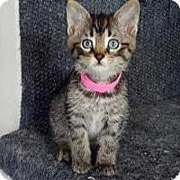 Adopt A Pet :: Audi - Richmond Hill, ON