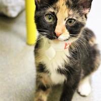 Adopt A Pet :: Biv - Lynchburg, VA