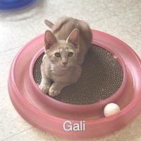 Adopt A Pet :: Galileo - Island Park, NY