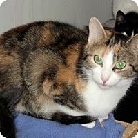 Adopt A Pet :: Sunshine - Orillia, ON