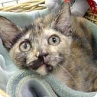 Domestic Mediumhair Cat for adoption in Miami, Florida - Eliana