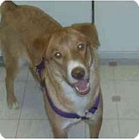 Adopt A Pet :: Honey,(URGENT)FL - Miami Beach, FL
