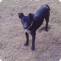 Adopt A Pet :: Alva- In CT - West Hartford, CT