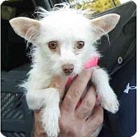 Adopt A Pet :: Yubi - Albuquerque, NM