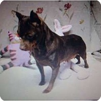 Adopt A Pet :: Pick me!! - Inglewood, CA