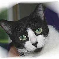 Adopt A Pet :: Sheridan - Montgomery, IL