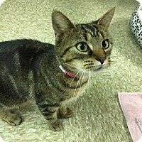 Adopt A Pet :: Edith - Medina, OH