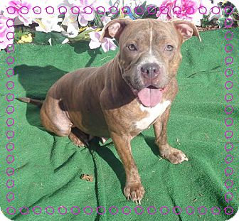 Pit Bull Terrier Mix Dog for adoption in Marietta, Georgia - GRACIE (R)