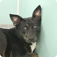 Adopt A Pet :: Millie - Savannah, TN