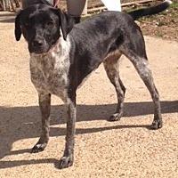 Adopt A Pet :: Oreo - Baton Rouge, LA