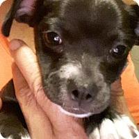 Adopt A Pet :: Raven - Thousand Oaks, CA