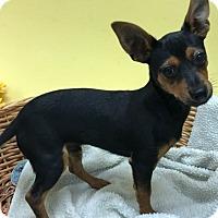 Adopt A Pet :: Paulie - Decatur, AL