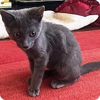 Adopt A Pet :: Ruby - Orange, CA