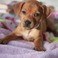 Adopt A Pet :: Lima A1883479 - Davie, FL
