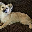 Adopt A Pet :: Kota (CNC)