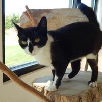 Adopt A Pet :: Jade - Monroe, WI