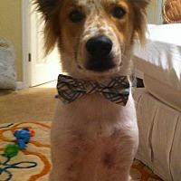 Adopt A Pet :: Cooper - Jacksonville Beach, FL
