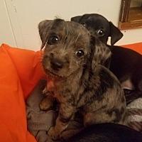 Adopt A Pet :: Lost Boy - Houston, TX