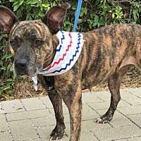 Adopt A Pet :: *VERITY - Austin, TX