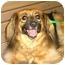 Photo 3 - Sheltie, Shetland Sheepdog Mix Dog for adoption in Kingwood, Texas - Foxy