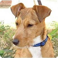 Adopt A Pet :: Benny - Arlington, TX