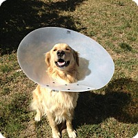 Adopt A Pet :: Finn - San Dimas, CA