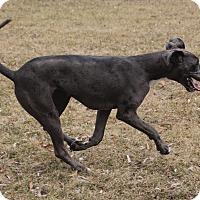 Adopt A Pet :: Greta - Woodstock, IL