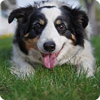 Adopt A Pet :: Buckley - Denver, CO