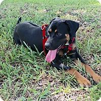 Adopt A Pet :: BEN - Brooksville, FL