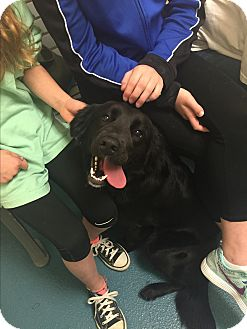 Border Collie/Flat-Coated Retriever Mix Dog for adoption in Chicago, Illinois - Maggie