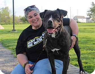 American Pit Bull Terrier Mix Dog for adoption in Elyria, Ohio - Bubba