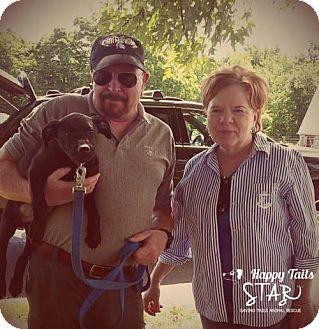 Labrador Retriever Mix Puppy for adoption in Northville, Michigan - zMilo - ADOPTED