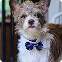Adopt A Pet :: Scruff - Baton Rouge, LA