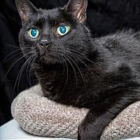 Adopt A Pet :: LULU - Franklin, TN