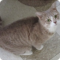 Adopt A Pet :: Jewel - Glenwood, MN