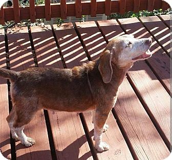 Beagle Mix Dog for adoption in Gulfport, Mississippi - Summer