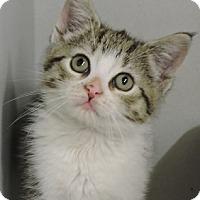 Adopt A Pet :: Electra - Massapequa, NY