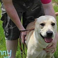 Adopt A Pet :: Sunny - Elmsford, NY
