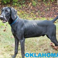 Adopt A Pet :: OKLAHOMA - Franklin, NC