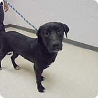 Adopt A Pet :: Lobo - Lonely Heart - Gulfport, MS