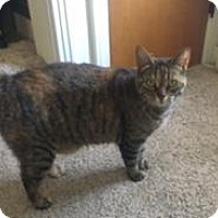 Adopt A Pet :: Bobbi - brewerton, NY