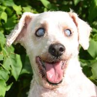 Adopt A Pet :: Benny - Englewood, FL