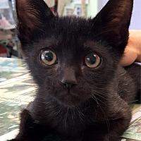 Adopt A Pet :: Magic - Key Largo, FL